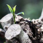 ¿Brotes verdes o reduccionismo mercantilista?