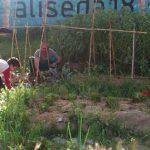 Grietas en el muro XXVI: De solar abandonado a huerto urbano